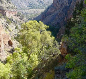 Falls Trail view