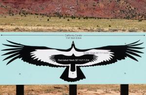 California Condor wing span