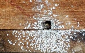 CU-Il-Divino-bees