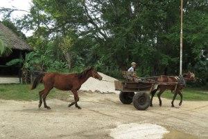 CU-Santa-Clara-horse-cart