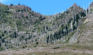 WA-Mt-St-Helens-dead-trees