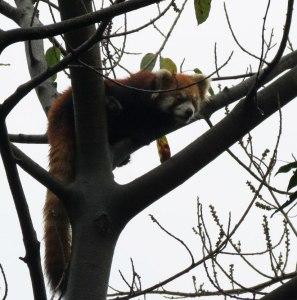 CH-Panda-Preserve---Red-Pan